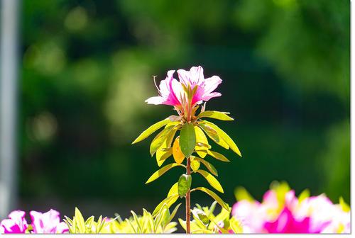 0505flower02.jpg