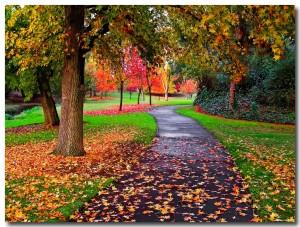autumn1122.jpg