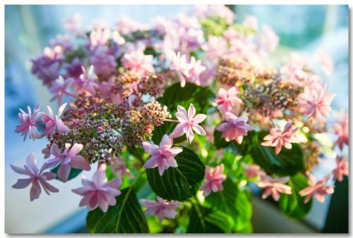 0521flowers01.jpg