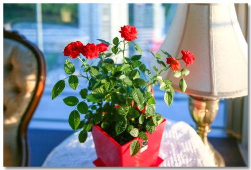 0521flowers02.jpg