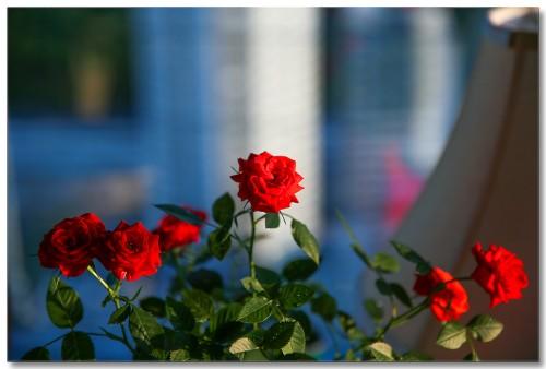 0521flowers03.jpg