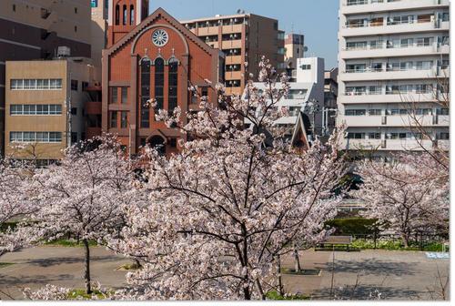 0328sakura02.jpg