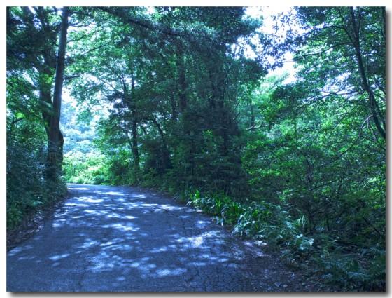 20120722forest02.jpg