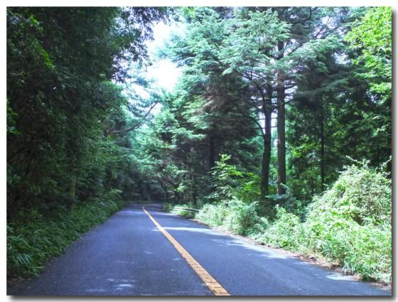 20120722forest03.jpg