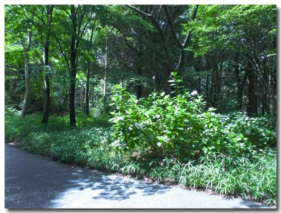 20120722forest05.jpg