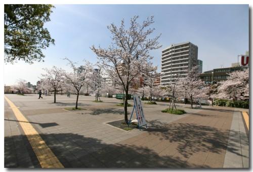 0402sakura05.jpg
