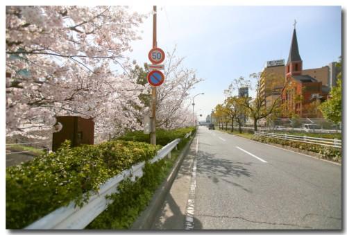 0402sakura12.jpg