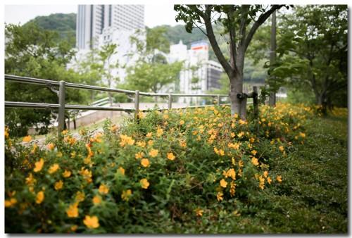 0506parkflower01.jpg