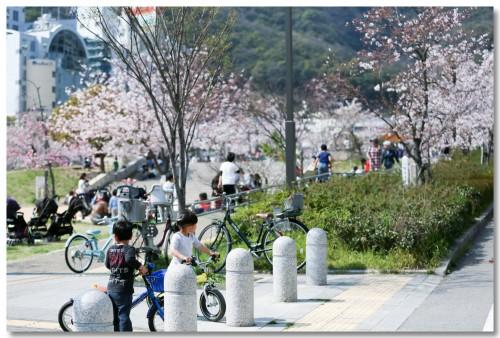 0331sakura02.jpg