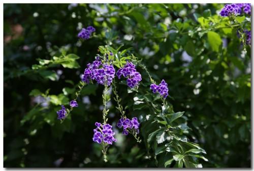 0904flowers.jpg