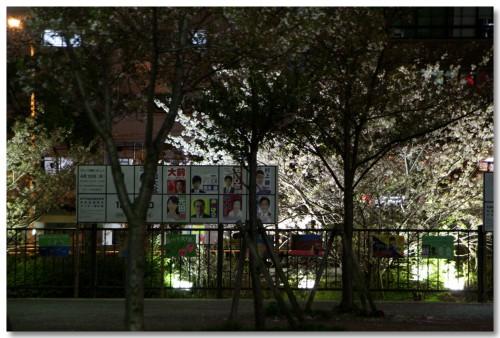 sakura-nightview02.jpg