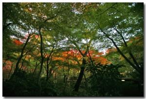 zuihoujipark06B.jpg