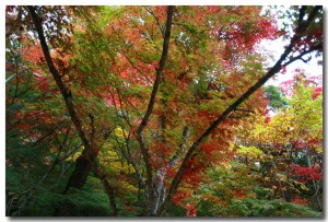 zuihoujipark13B.jpg