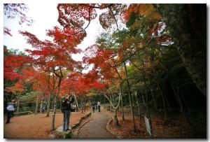 zuihoujipark14B.jpg