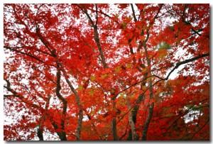 zuihoujipark17B.jpg