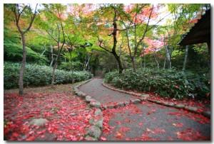 zuihoujipark18B.jpg