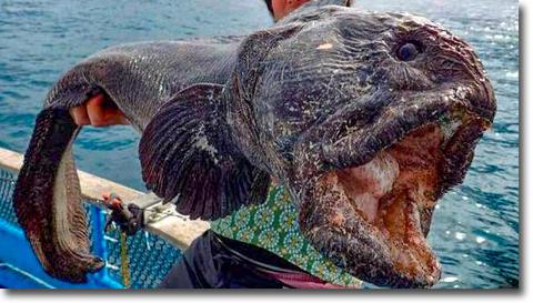 太平洋側の魚介類には注意が必要