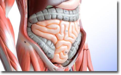 CS60で腸を活性化