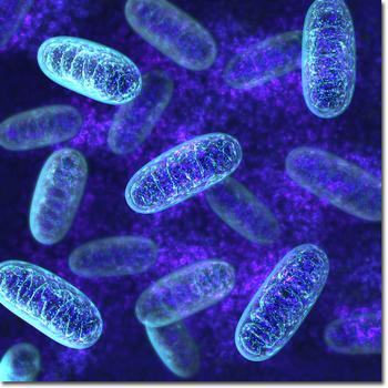 mitochondria02.jpg