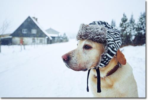 cold01.jpg