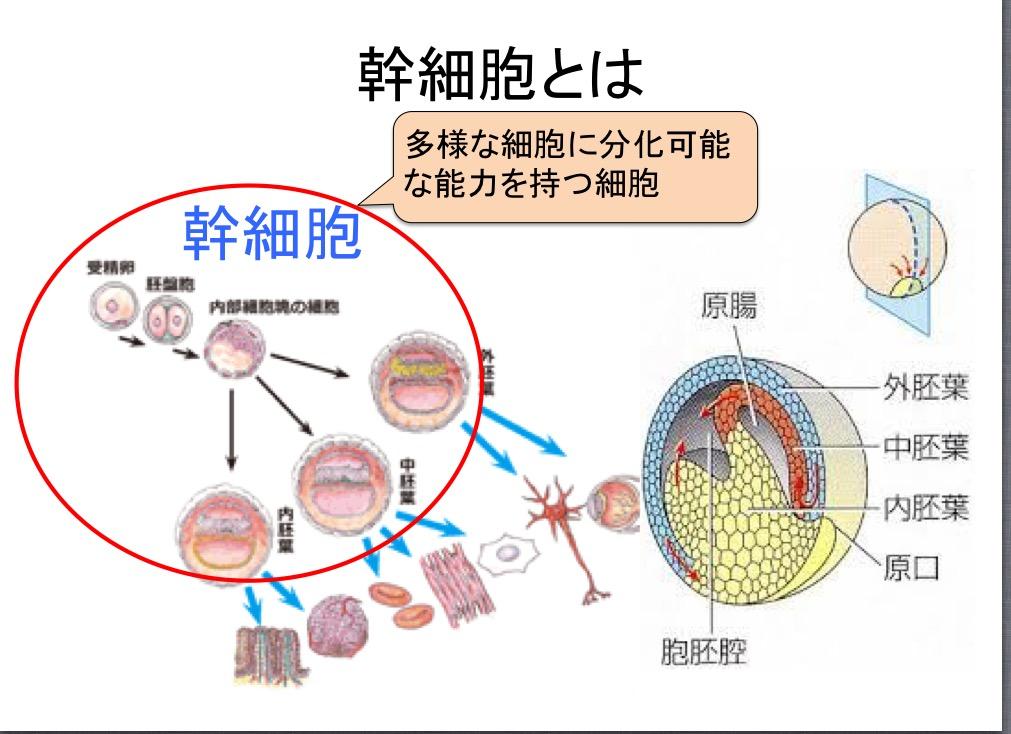 幹細胞と幹細胞培養液